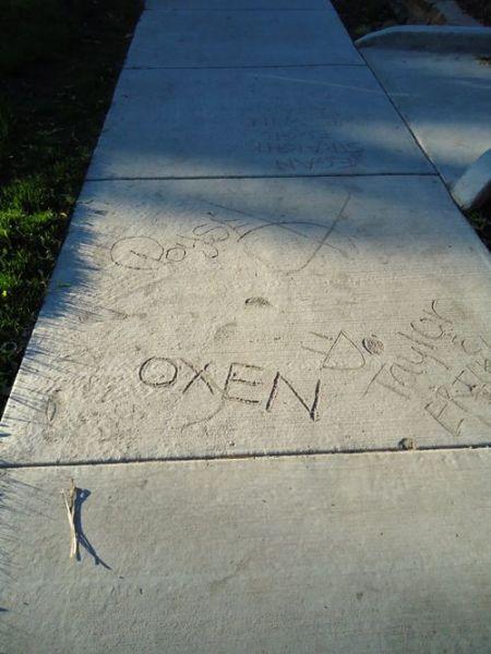 OxenSidewalk